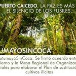 Acuerdo para sustituir cultivos es una demostración de que los campesinos del Putumayo quieren #UnNuevoPaís http://t.co/bL1dgn3kNq