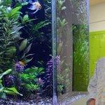Dunedin Hospital has spent $129,000 on a fish tank http://t.co/HcUQPQWntJ http://t.co/DXwNJe6PNp