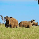 :::I have an awesome number of rhinos and ellys @UKenyatta lets save these amazing species @paulakahumbu @TheFuse984 http://t.co/A6LhF9y3A0