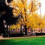 ????Golden in Capitol park #sacramento #California @VisitSacramento @sacstate http://t.co/5zX1ENpW3x