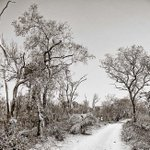 Depleted miombo forest. In Postcards from Zambia. - http://t.co/KcJtWW8uqt http://t.co/miIU9SsVRk