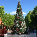 The new Xmas tree in civic ready for lights to be turned on on Friday with @SIDSandKidsACT amazing light display #CBR http://t.co/RpJtPhSdDh