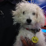 Iggy says hi! She needs a new home for the holidays. @adloftx @JessicaDHeadley @KABBFOX29 http://t.co/sNWfD7NGgf