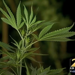 A metro Atlanta lawmaker is pushing to legalize marijuana in Georgia. Hear from him at 5:46: http://t.co/a3Sb4qdkCr http://t.co/Fh7aOBx2Jm