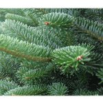 The Xmas trees are priced from £35-£55, which includes delivery & post Xmas collection! (to selected postcodes) http://t.co/QutFKfDxbf
