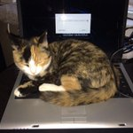 RT @thepacketrat: My cat even has a very strong password. http://t.co/rGbBqWUtO6