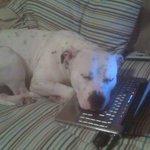 Я не видел свою собаку уже 5 месяцев.Вчера вечером звонил домой по скайпу.После разговора мама прислала мне эту фотку http://t.co/XwIZ3BAKUS