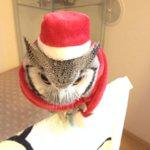 今年のサンタはさつまがやります プレゼントは「羽毛」 1本あげるごとに防寒が弱くなっていく諸刃… http://t.co/vTTtkc5g4X