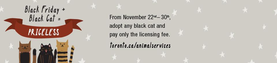 #Toronto, adopt a black cat on #BlackFriday for only $15. All these cuties are waiting: http://t.co/h25J8rj2U2 http://t.co/asYkJmT5Ay