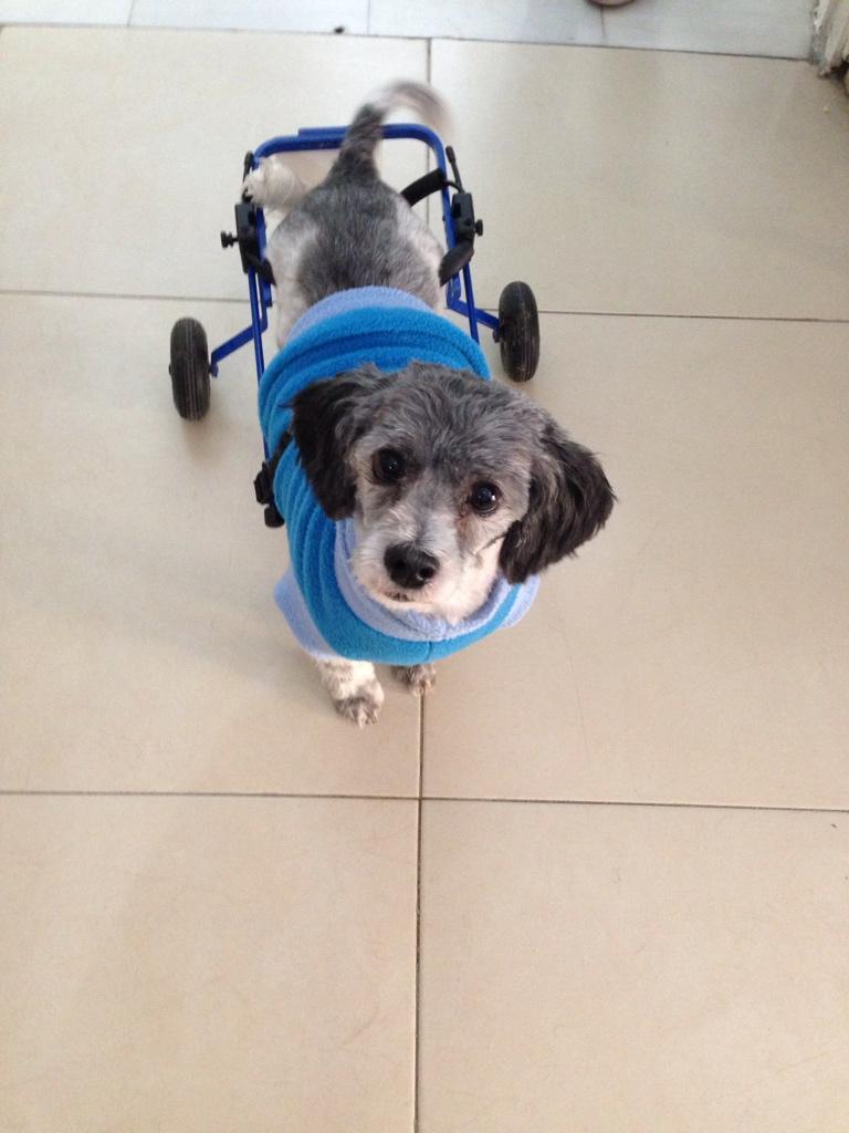 Oigan! En la clínica veterinaria que vengo tienen en adopción a esta hermosura. Please RT http://t.co/pwpDetebGv