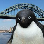 Geordie the penguin - Warning this version is not suitable for kids like the original! http://t.co/MiRvb70Cyd http://t.co/U3Rip2HvXn