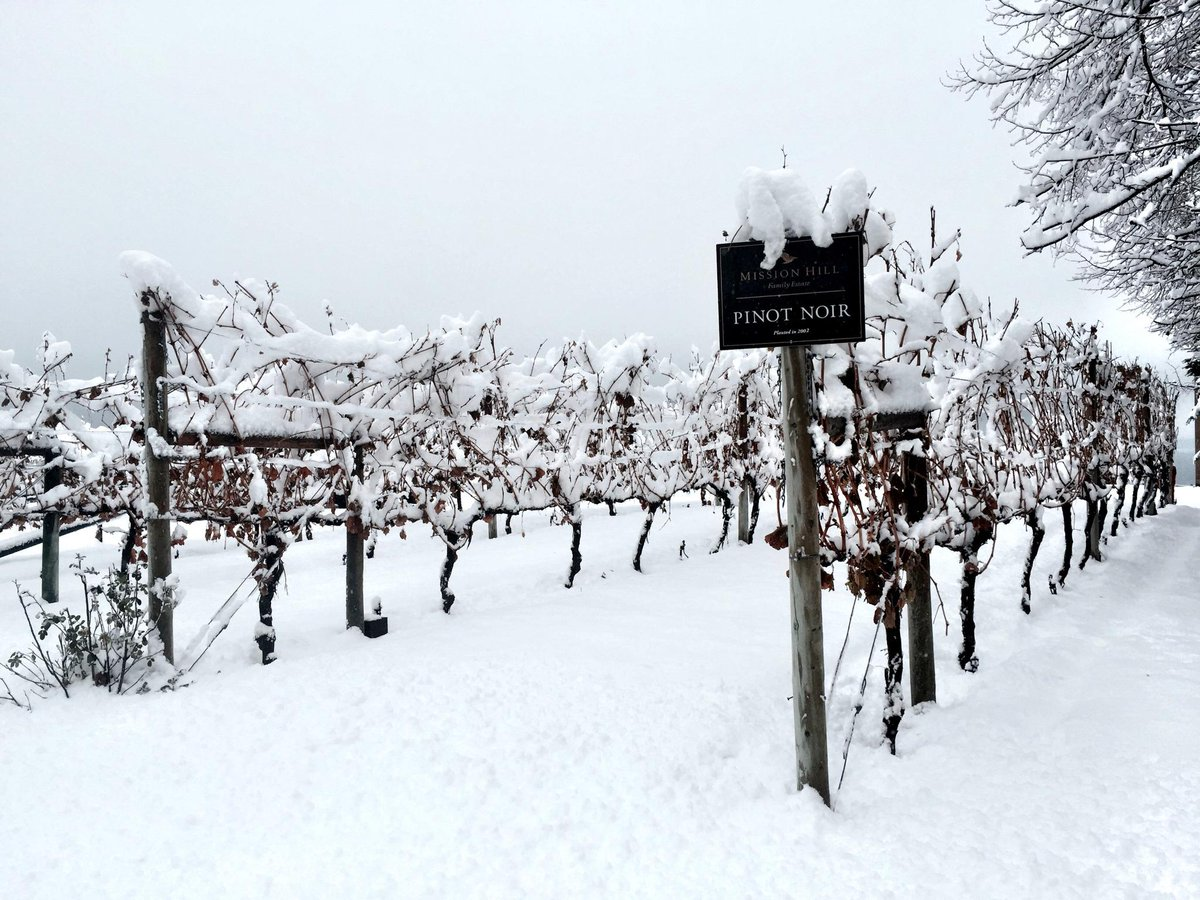 A first for this winter - snow @MissionHillWines! http://t.co/3oWgyoSJxq