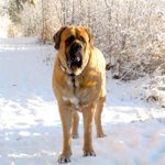 10 ways to keep your dog active through those long #yeg winter months: http://t.co/oTcdVYSWrP http://t.co/z5RUOp65vt