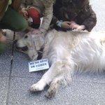 Piden unha estatua para un can na Coruña http://t.co/kzPCVtuaEt vía #cabozo de @Gconfidencial #ACoruña #Galicia http://t.co/YFAxUE8DvT
