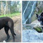 Is Kelowna the most dog-friendly city? Well talk to @CdnDogsAnnual @ 4:45 PT. Also, this is Ali, @joshreports dog. http://t.co/CER95YKBiJ