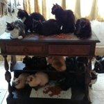 É de algum de vocês? RT @JornalOGlobo: Polícia resgata 130 gatos em apartamento no Rio. http://t.co/LtHFBf019B http://t.co/YffFhPdz76