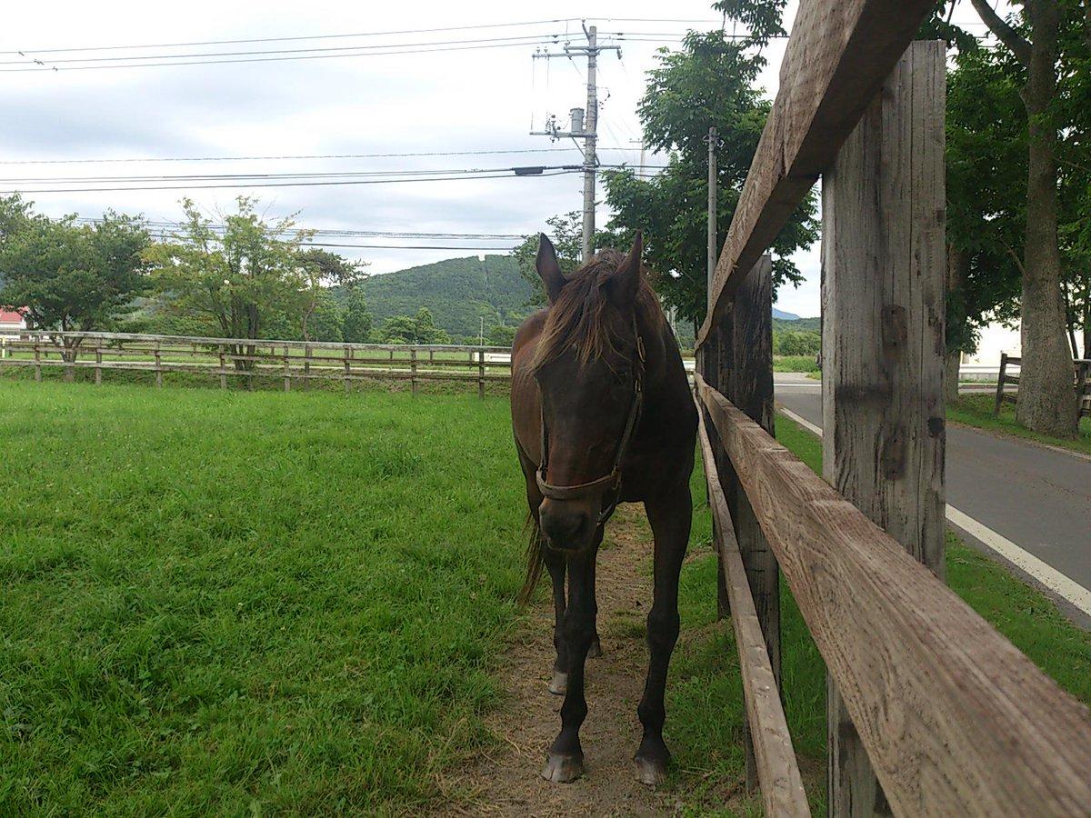 引退名馬の死亡について ミホシンザンが12月4日朝、死亡したとの連絡がありました。 https://t.co/Bg5RjKBZfg http://t.co/qvJQhKWDpL