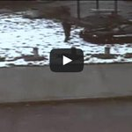UPDATE: Video shows Cleveland cops gun down 12-year-old Tamir Rice in seconds http://t.co/ZoiVYortPb http://t.co/Te6KxgReiD