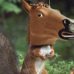 Happy holidays! Let's all take a moment to give thanks for this tiny horse mask for squirrels http://t.co/4rm63iMmY5 http://t.co/8OP7LoBzwg