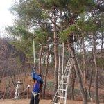 지금 성남시의 근린공원에서는 재해위험수목 등의 전정작업이 이루어지고 있습니다:) 놀라지 마세요~ 더 나은 공원환경을 위한 작업이랍니다~ @Jaemyung_Lee #성남시 http://t.co/5cvCHwp55k