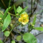 Conférence environnementale : une fleur jaune et beaucoup dabsents http://t.co/9nRwy8iuYv #ConfEnvi http://t.co/Lq3OkNSTf3