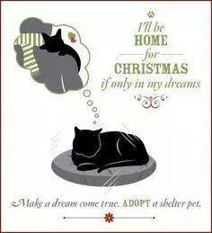 A fantastic poster please RT maybe it will help many pets get a home for Xmas. http://t.co/eYLzj1NpDa