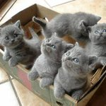 A box full of happiness http://t.co/AFMaGLl7K0