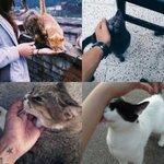 """@nicotineaddixt: Me when i saw stray cats http://t.co/HdfPJNifVr"""
