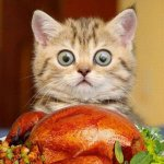 Happy Thanksgiving, Philly!  Lets be thankful for friends and family, beat Dallas, stay safe, and EAT. IT. ALL. http://t.co/DfU5Cbv3aG