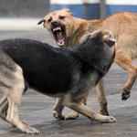 Почти тысяча жителей #НН пострадала от укусов собак по итогам 10 месяцев 2014 года. http://t.co/Do0JXEEbSy http://t.co/Z2vPri7Ykc