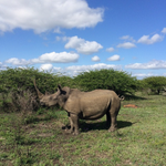 1,020 rhinos poached in South Africa already this year.. @world_wildlife #iam4rhinos http://t.co/ygxKw58Zou