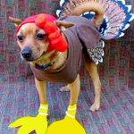 Best thanksgiving turkey weve seen all day #brighton http://t.co/skqdaTyByU