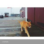 """By @rtomada """"Its a great day when I get to see my buddy Erik The Red @ns_mma @my_waterfront #Halifax #haligonia… http://t.co/EZWRPE0tcL"""