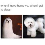 when I leave home Vs. when I get to class http://t.co/QHtSWcgyde