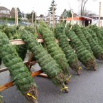 Get your Christmas Tree at Prince of Wales School. https://t.co/cQkNGRFGWX #vancouver #christmas http://t.co/wkBoIYp8KV