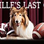Tonight is Reveille VIIIs last game at Kyle Field. Thank & Gig em for your service, #MissRev! #BTHOlsu #tamu http://t.co/kwv8FU85GG