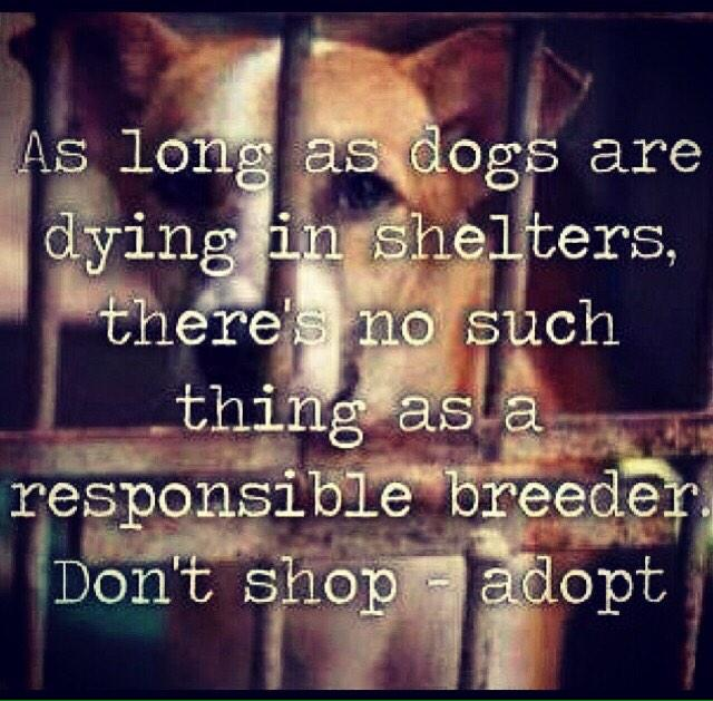 Please rescue instead of buying from a breeder #CauseforPaws http://t.co/Bw2hDtBZ6u