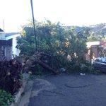 Informa @RoxanaRuiztv21: Árbol caído por fuertes vientos en av. Arturo Zablah, en la colonia Utila de Sta. Tecla http://t.co/zctek7qk7r