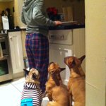 We didnt care what Mom was having for dinner last night, we just wanted food!! #dogs #dinner #Dublin @SuzieLovesFood http://t.co/sNXvBRKePy