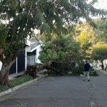 Fuertes vientos derribaron un árbol en Av. José Zablah Touché, col. Utila Santa Tecla. Via @AleCanales http://t.co/Ooxe35YmLb