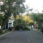 Vientos derribaron un árbol en Av. José Zablah Touché, col. Utila Santa Tecla. Paso restringido @NoticieroHechos http://t.co/2iUhZUNhWE