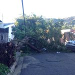 Árbol caído en Av.Arturo Zablah T. Col.Utila en Santa Tecla #vientos @TN21sv @Meganoticias19 http://t.co/5BUiSS4MzN