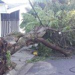 Árbol caído por fuertes vientos, sobre av. José Zablah Touche y 11 av.sur, col.Utila Santa Tecla.@teledos_tcs http://t.co/AtUKcfuPEy