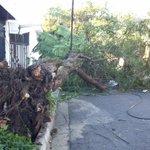 Árbol caído en la Av. Arturo Zabla Touche, en la colonia Utila, Santa Tecla http://t.co/BZbLauiRwJ vía @jfunes91