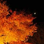 夜空と月と、宝厳院の紅葉。どこをどう切り取っても絵になりすぎて困るよね…。 もみじのトンネルも見事に色づいてて本当に綺麗やったよ!宝厳院の紅葉見てしもたら他の紅葉やと物足りんくなってまう…。 #嵐山 #紅葉 #京都観光 #kyoto http://t.co/gPUZFpw8jz