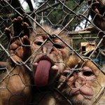The week in wildlife – in pictures http://t.co/jxcJjKxk6j http://t.co/9dGHX0EIfL
