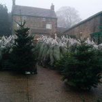 Plenty of trees left guys, so if youve not pre-ordered come see us this weekend! #sheffieldissuper #christmastrees http://t.co/YsOjZhD8gp