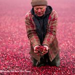 Cranberry growers are in a desperate race to get rid of their own leftovers http://t.co/ZvaZDDnseH http://t.co/PZa8RXSz6T