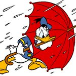 #YYJ drivers it is raining hard.Nice day if you are a duck.Be kind to Peds, dont hit standing water fast.#yyjtraffic http://t.co/OB2LrUFkQL