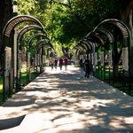 ¡relájate bajo la sombra de sus árboles y disfruta de un momento único! Paseo las Alamedas http://t.co/MBFiUAKFg5 http://t.co/2ygnrGKBDw